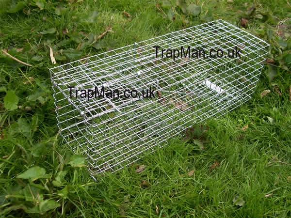 eco squirrel trap