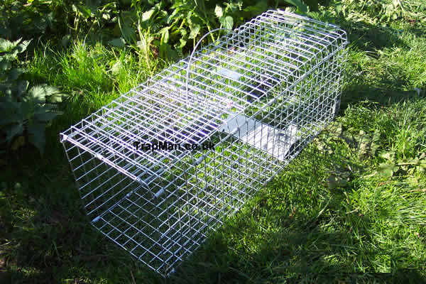 single catch Folding pigeon trap