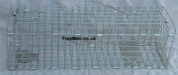 Folding squirrel trap, TrapMan folding squirrel trap, quick to set up, easy to use, an effective squirrel trap that catches squirrel's without harm.