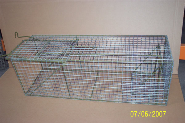 large cat trap set