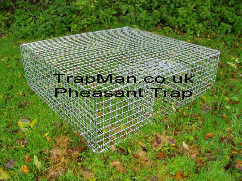 Pheasant Trap, multi catch pheasant trap ideal for clearing up loose birds at the end of the season. Bait the area every day at the same time, before placing the pheasant trap, so the birds get accustomed to the feeding routine, then place the trap with a small amount of corn leading into the entrance and bait inside the cage near the sides.