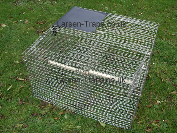 larsen magpie trap top entry