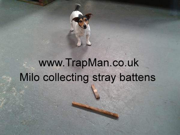 "Milo collecting ""stray"" battens"