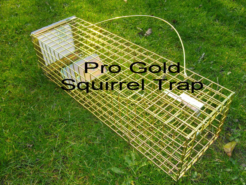 pro gold squirrel trap, when only the best squirrel trap will do!