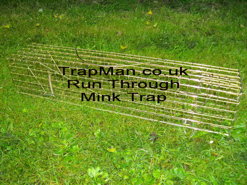 run through mink trap This trap man run through trap requires no baiting, the run through design relies on the mink to enter the tunnel trap during its normal hunt for food. The mink simply steps onto the central treadle plate that triggers both doors to spring shut.