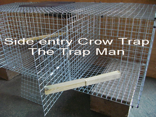 side entry crow trap setting