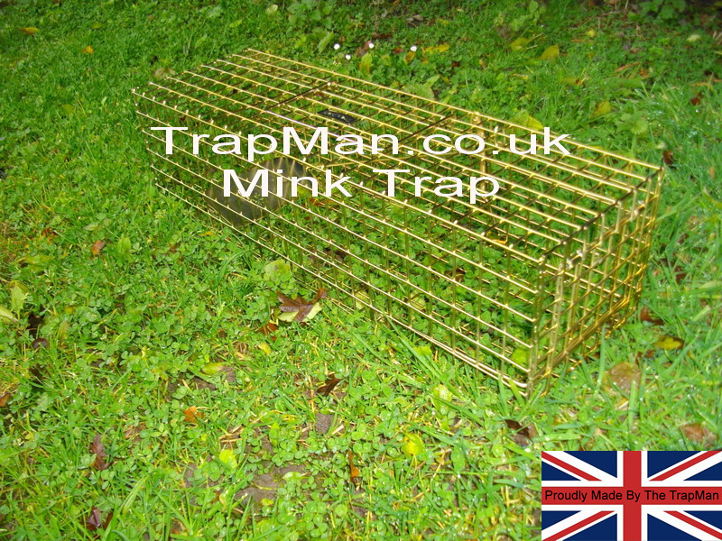 The Trap Man humane live catch mink trap should be set near the bank of a stream, or where obvious mink tracks are visible. Set the trap by pressing on the side handle this automatically unlocks and opens the door, with you other hand reach inside the mink trap and place the setting bar under the spring loaded door. For bait, use fish, kipper or tinned cat food, cut in small pieces and placed under the trap under the treadle plate, so that the mink will step on to the treadle to reach the bait. Cover the trap with leaves, grass or sacking, leaving the entrance and rear of the trap clear.