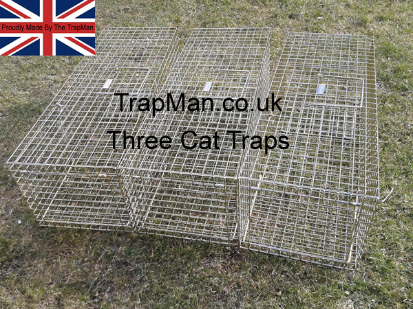 three feral cat traps