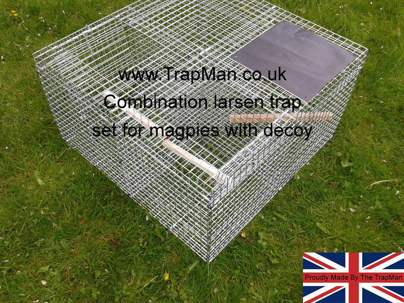 combination larsen trap set for magpies twin top entry and decoy