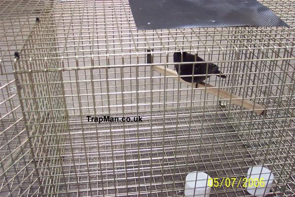 crow trap decoy compartment