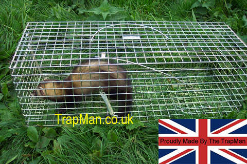 How Much Is Pest Control >> large mink trap, Large mink, polecat trap, Much larger trap for mink, wildcat or polecat size 27 ...