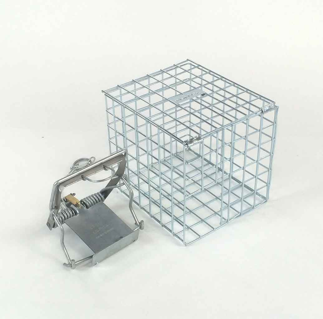 Mk4 Fenn Trap (genuine) and protection cage Made in The UK Approved in the UK to catch & kill rats & grey squirrel.