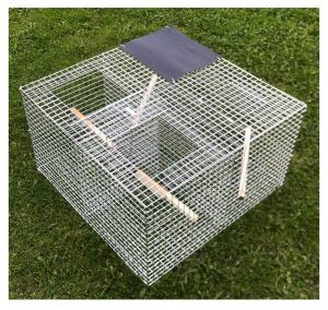 Magpies season is upon us Get your magpie traps NOW