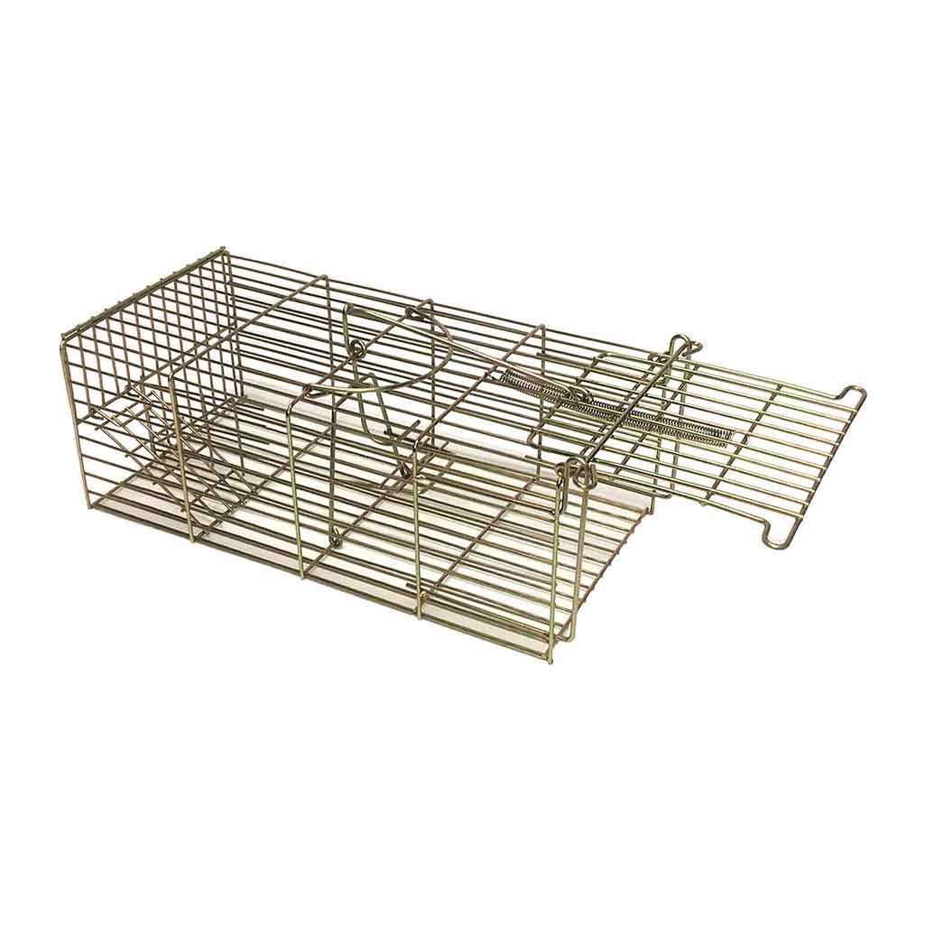 Family 14″ rat traps back in stock