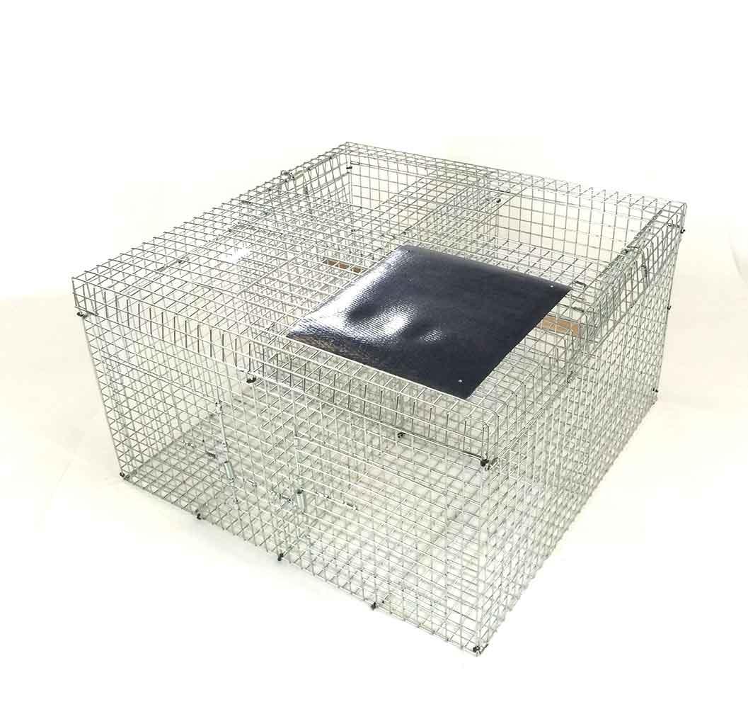 Lasen corvid trap, larsen trap, crow trap, jay trap, folding larsen trap