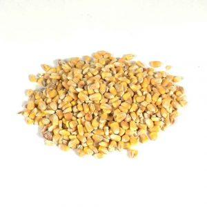 whole yellow maize trap bait