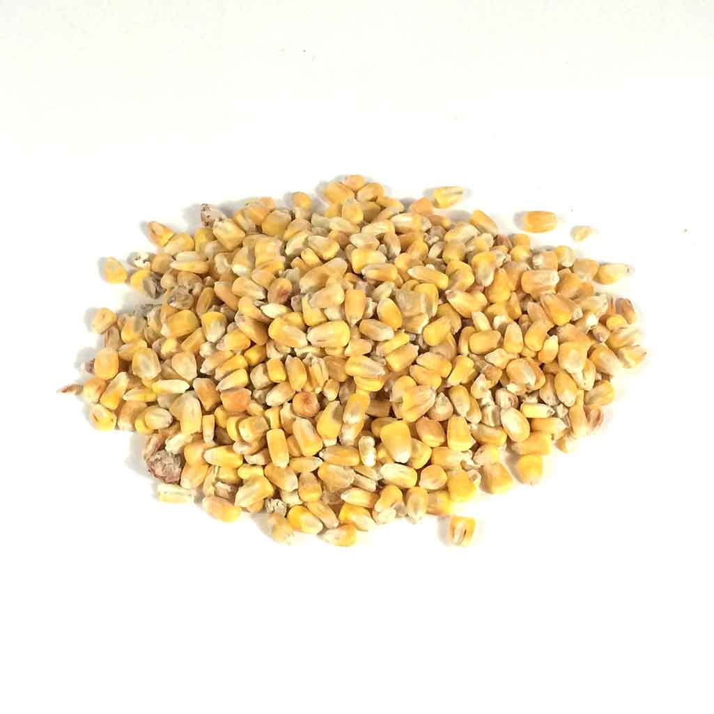 whole yellow maize trap bait