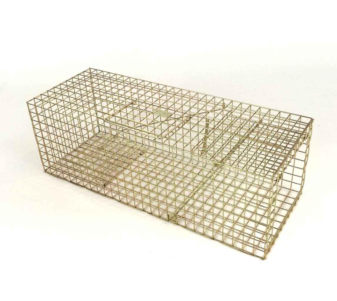 kitten trap