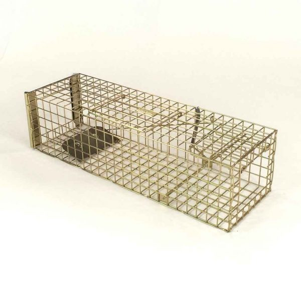 pro gold squirrel trap set