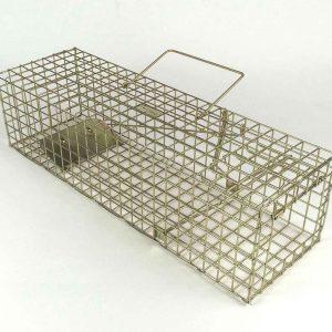 squirrel trapl set